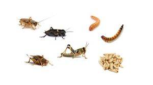 Picture for category Feeder Insects & Supplies