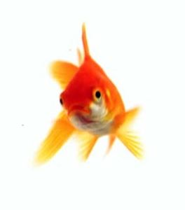 Picture for category Goldfish Food