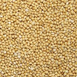 Picture of Westerman's Yellow Millet