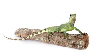 Picture for category Reptiles & Amphibians
