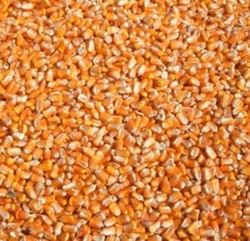 Picture of Westerman's - Maize - Whole