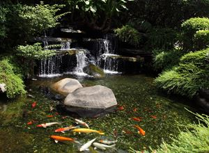 Picture for category Ponds & Pools