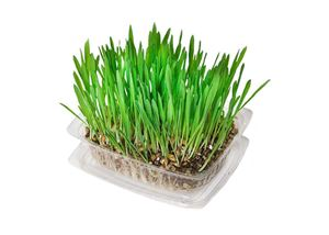 Picture for category Cat Grass