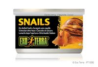 Picture of Exo-Terra Snails