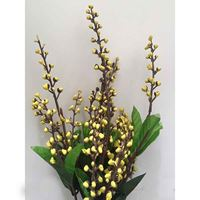 Picture of Plant Bunch - Yellow Flower Tips