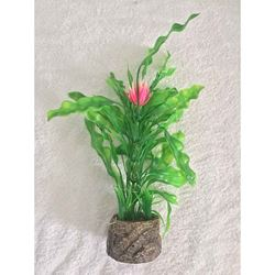 Picture of Aquatic Sword & Flower Plant
