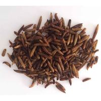 Picture of CALCI Worms (Black Soldier Fly larvae) - Freeze Dried