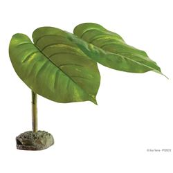 SCINDAPSUS - SMART PLANT / TREE FROG PLANT