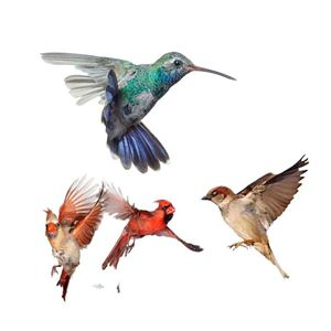 Picture for category WILD BIRDS Feeds, Treat & Feeders