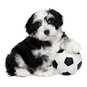 Picture for category Dog & Puppy Balls