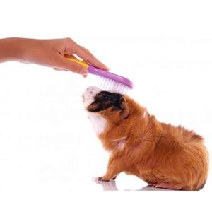 Picture for category Small Pet Grooming