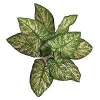 Resin Base Green / White Variegated Plant