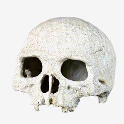 Nomo resin Skull NS-73