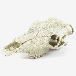 Nomo resin Skull NS-74