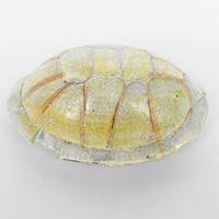 NOMO resin Shell NS-106