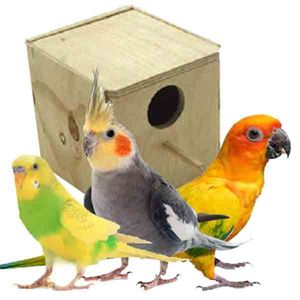 Picture for category Parakeet Nests