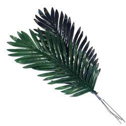 Plant Palm Leaf