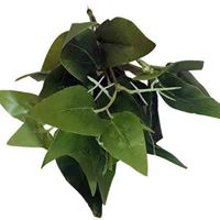 Base Plant Green 1