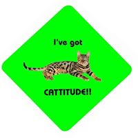 I'VE GOT CATTITUDE