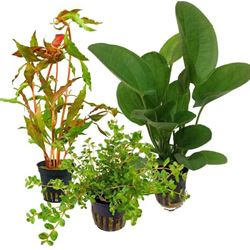 Picture of Special Random Mix Aquatic Plants