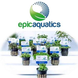 Picture for category EA Plants - Limited Stock Supply