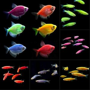 Picture for category GLO Fish