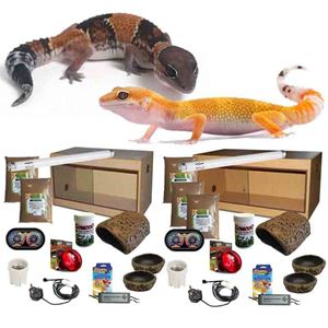Picture for category Leopard Gecko Complete Kit