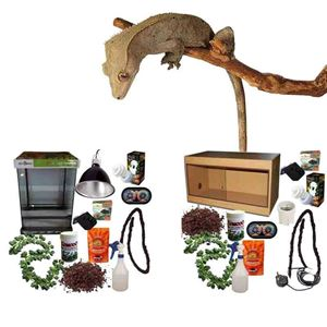 Picture for category Crested Gecko Kits