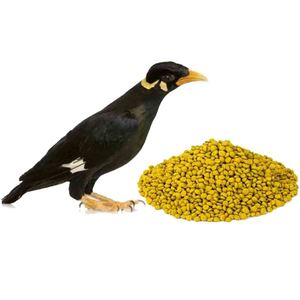 Picture for category Mynah & Soft Bill Feeds