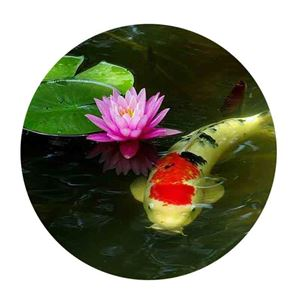 Picture for category Pond Water Care