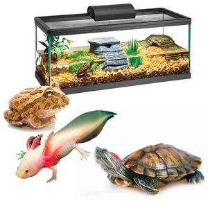 Picture for category Amphibian / Turtle / Frog  Kits